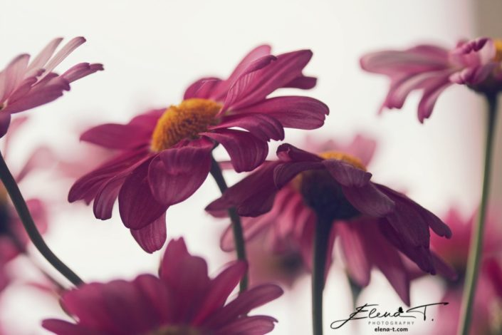 Elena T. Photography - Till Dusk Do Us Part
