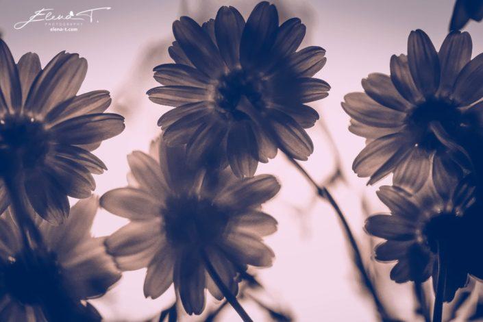 Elena T. Photography - Wicked Shades